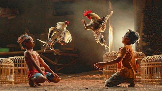 Deposit Judi Sabung Ayam S128 Resmi